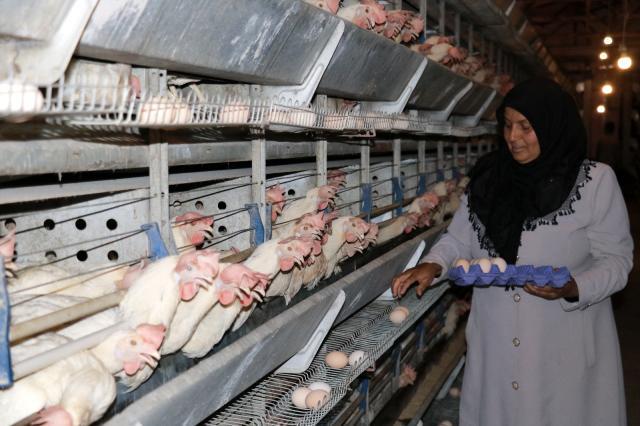 Bakan Pakdemirli tavukları telef olan kadın girişimciye verdiği sözü yerine getirdi